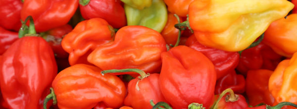 7 Reasons Why Chili Peppers Make You Live Longer